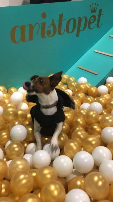 Foto de Piscinas de bolas para perros