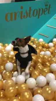 Piscinas de bolas para perros
