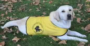 Foto de Perros de Servicio de la Fundación Canadd Internacional