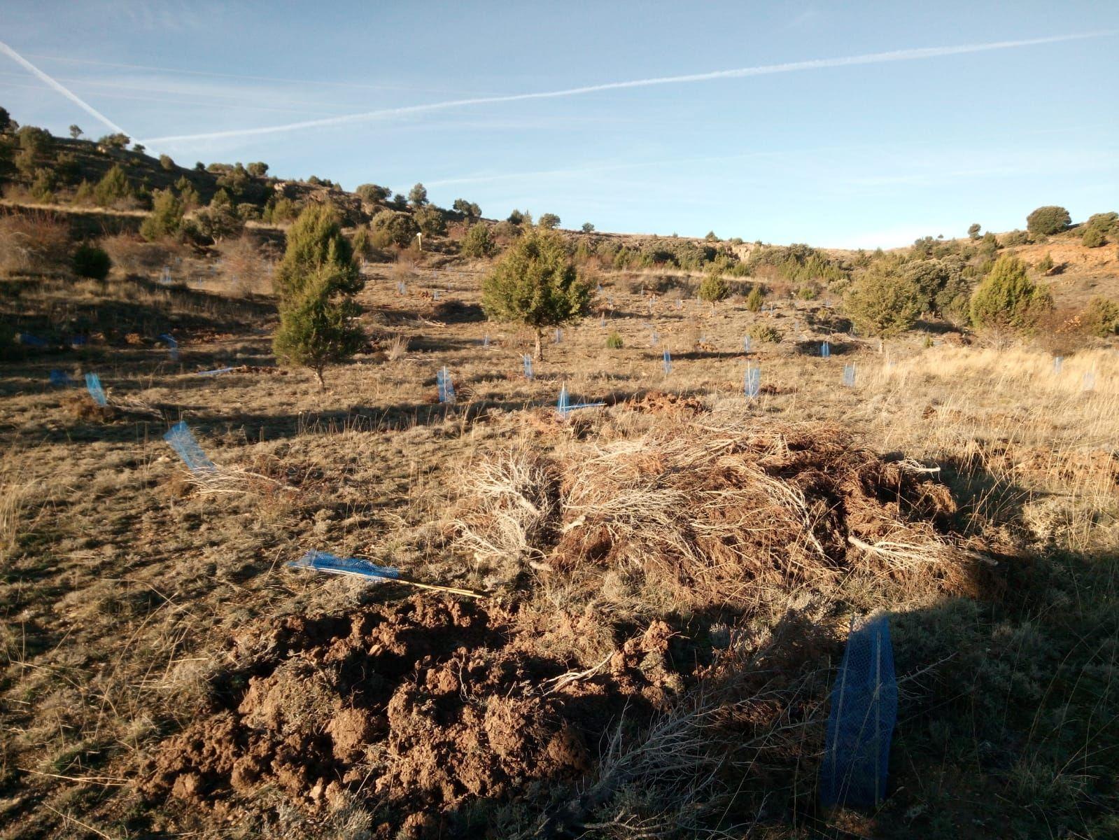 Fotografia Aspedto de una tierra agricola una vez abandonada