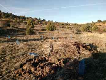 Foto de Aspedto de una tierra agricola una vez abandonada