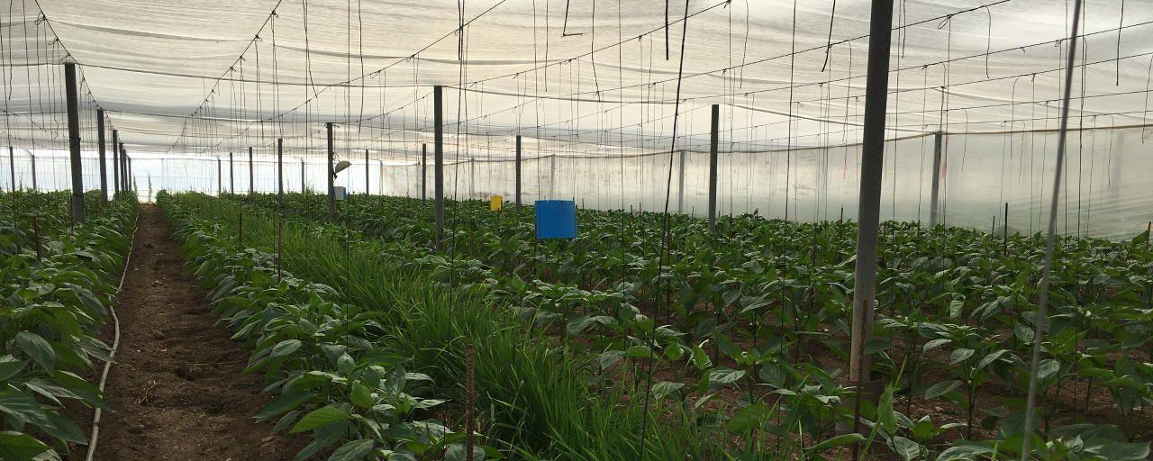 Foto de Agricultura Intensiva