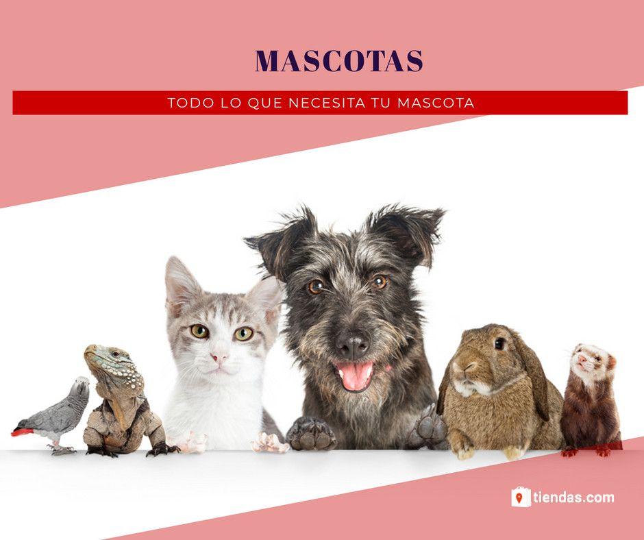 Fotografia Productos para mascotas