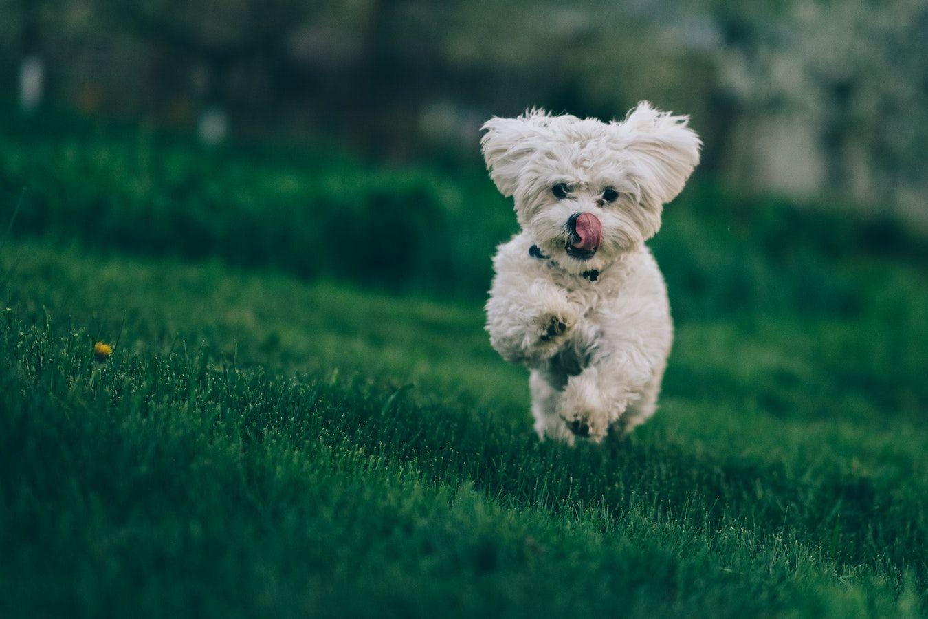 Foto de Las mascotas pueden sufrir estrés durante las mudanzas