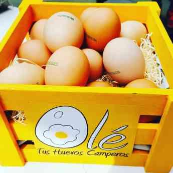 Franquicia Olé Tus Huevos Camperos