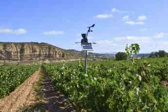 Foto de Estación agroclimática Cesens® en viñedo de Rioja