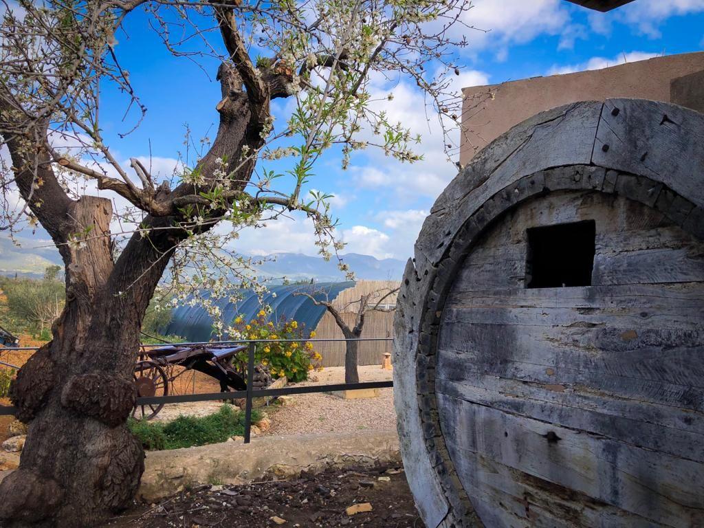 La agencia de enoturismo Winenium se estrena con nuevas actividades en Mallorca