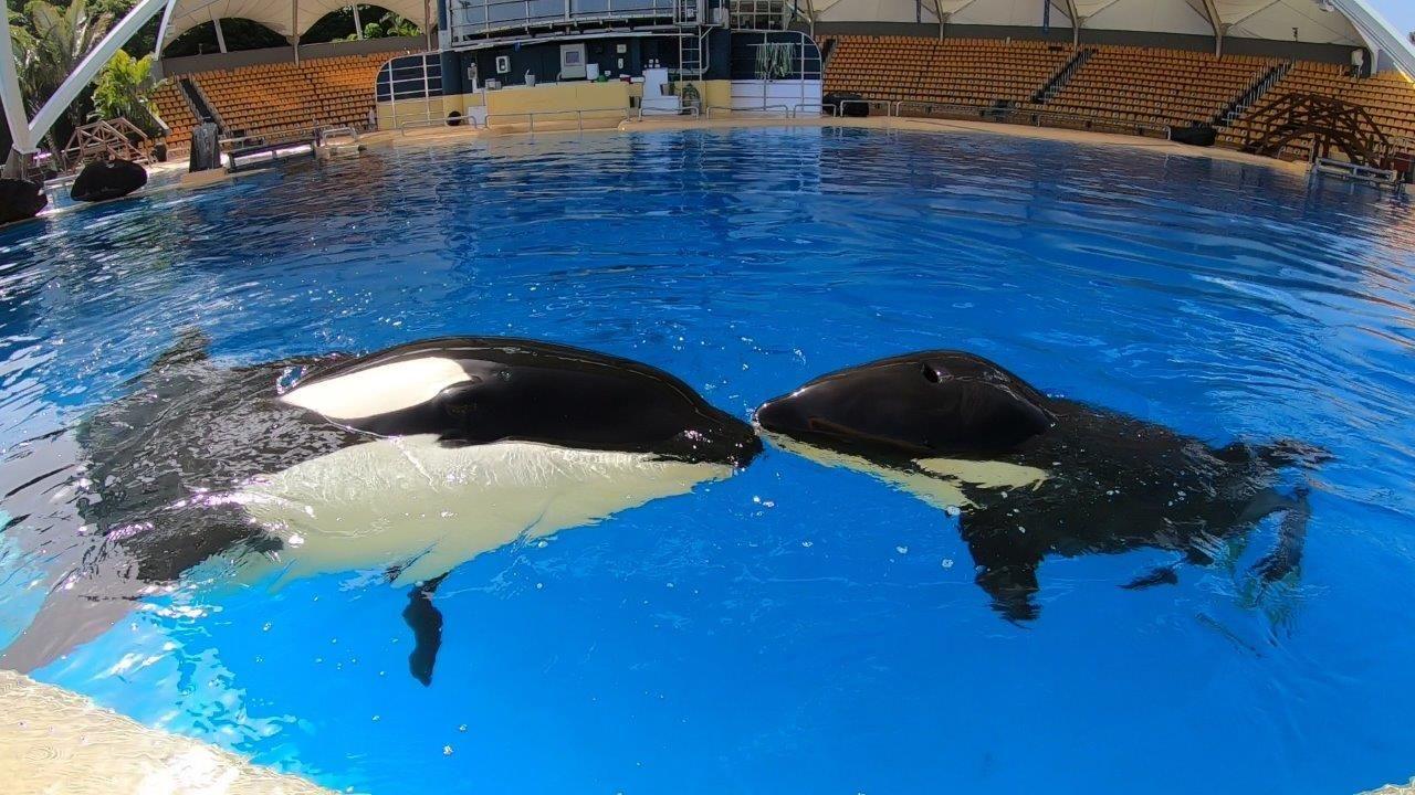 Fotografia Morgan y Ula en Orca Ocean, Loro Parque