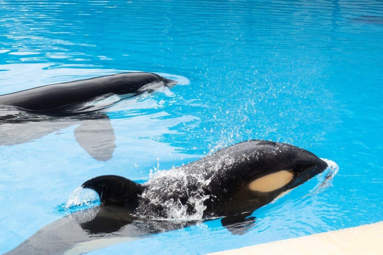 Fotografia Morgan y Ula en Orca Ocean, Loro Parque (2)