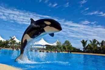 Morgan en Orca Ocean, Loro Parque