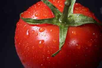 Bodega de los Secretos aporta 8 interesantes datos sobre el tomate