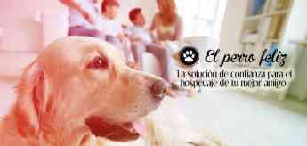 Franquicia El Perro Feliz