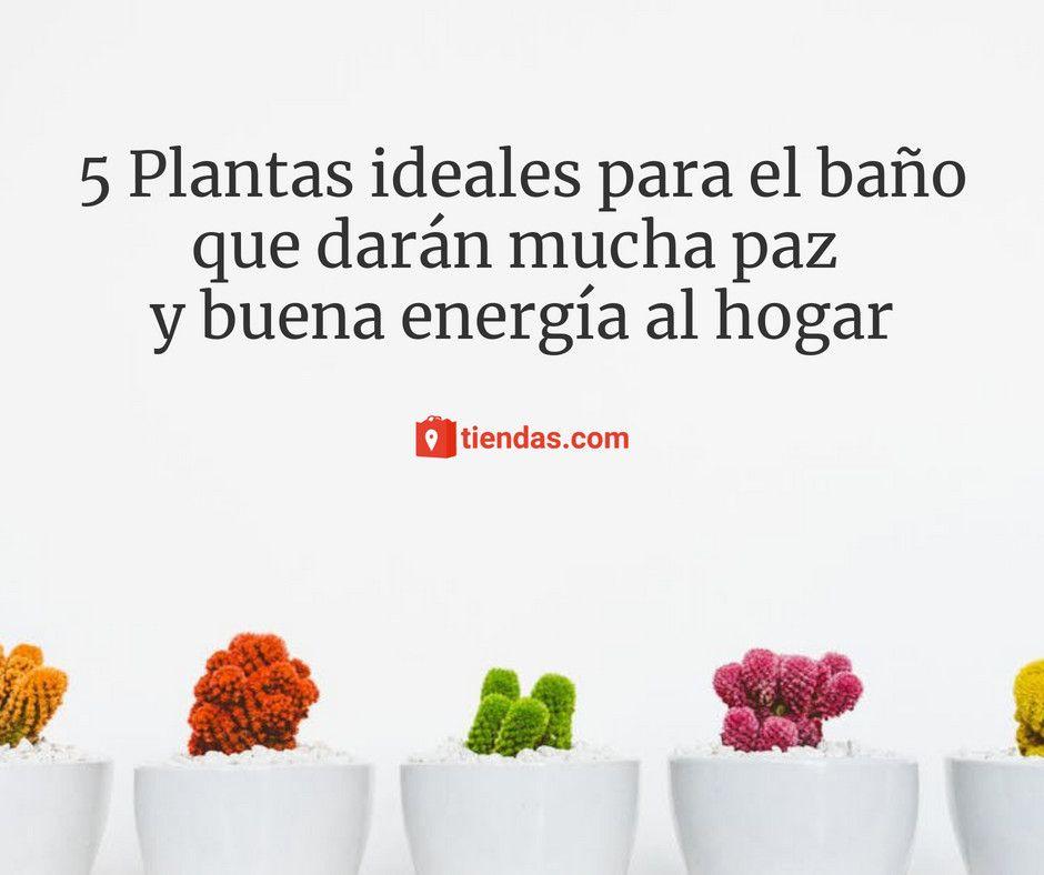 Foto de 5 Plantas ideales para el baño que darán mucha paz y buena
