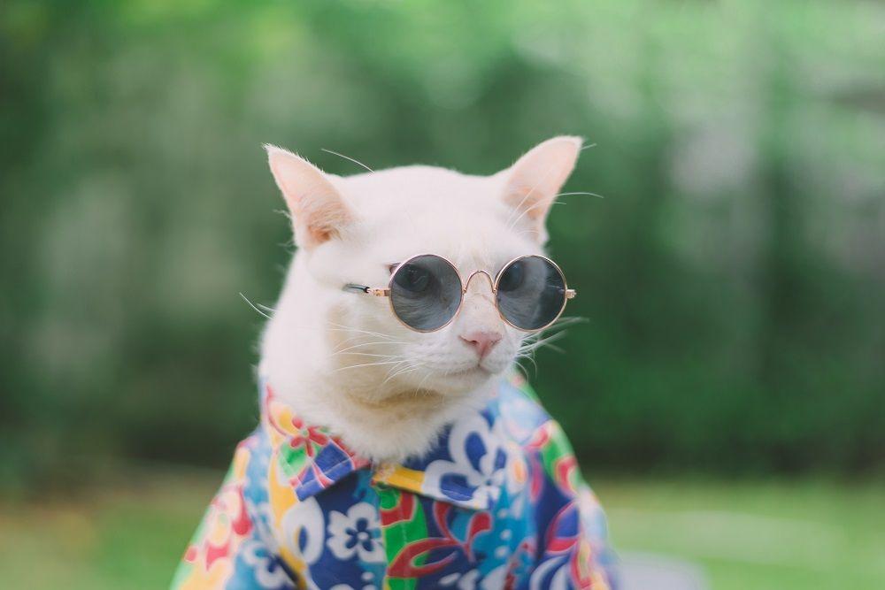 Todo lo que un gato necesita para las vacaciones, segun Todogatos.eu