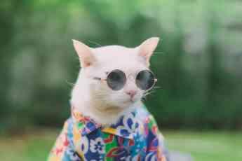 Cuidados para gatos durante el verano