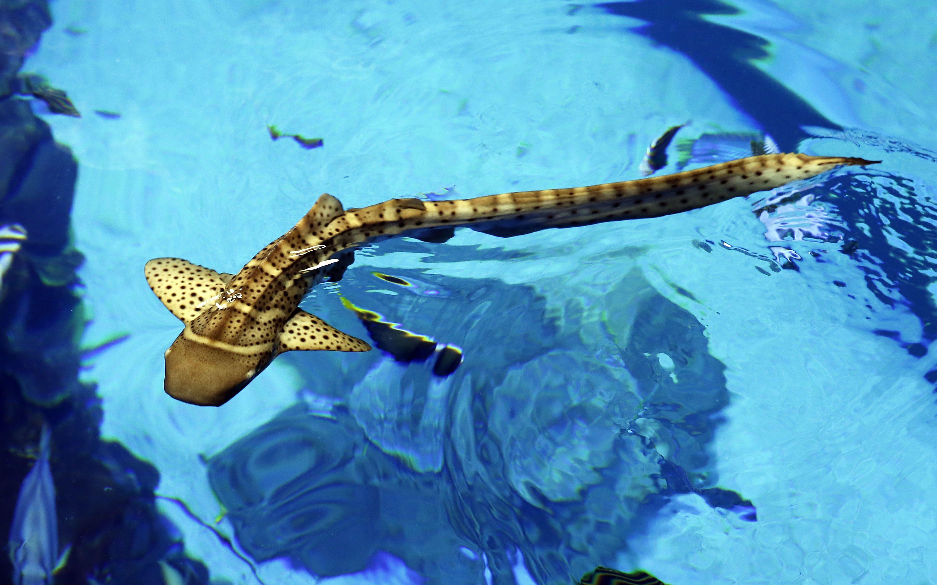 El acuario Poema del Mar da la bienvenida a dos tiburones cebra nacidos en Loro Parque