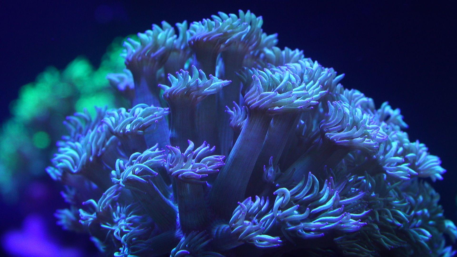 Foto de Granja de corales en Loro Parque