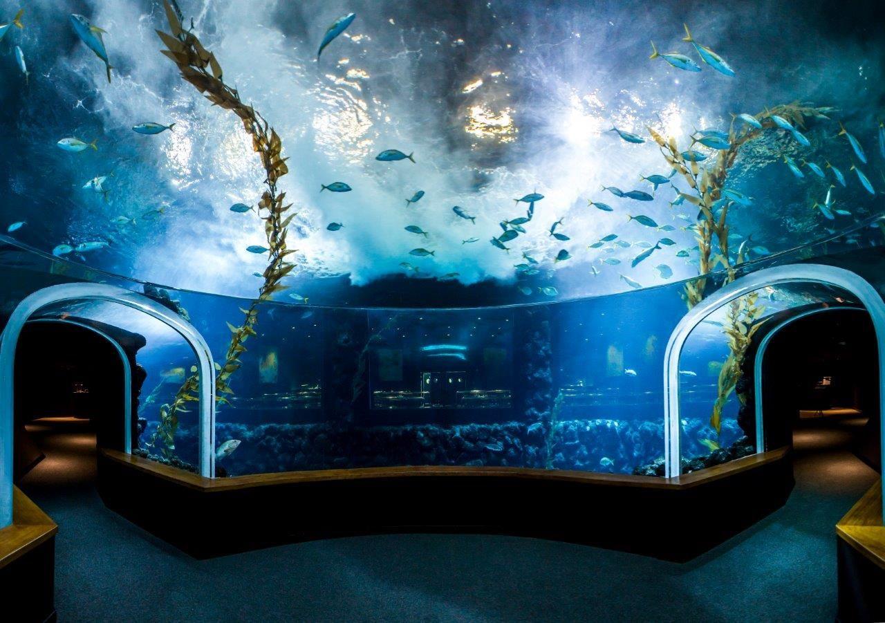 Fotografia Poema del Mar obtiene el Certificado de Excelencia de