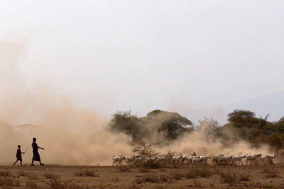 https://www.slu.edu/news/img/herders-960.jpg