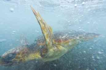 Loro Parque Fundación celebra el Día Mundial de los Océanos con una gran limpieza de plástico y una suelta de tortugas
