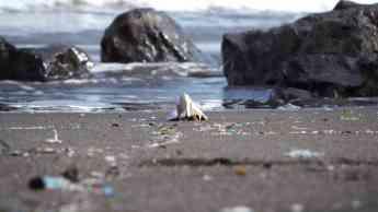 Loro Parque Fundación analiza la presencia de plástico en las