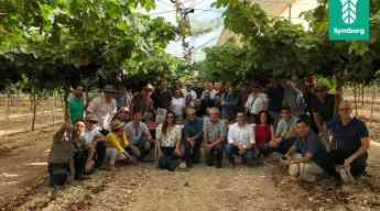 Gira Técnica con productores internacionales de Uva de Mesa a ITUM Murcia