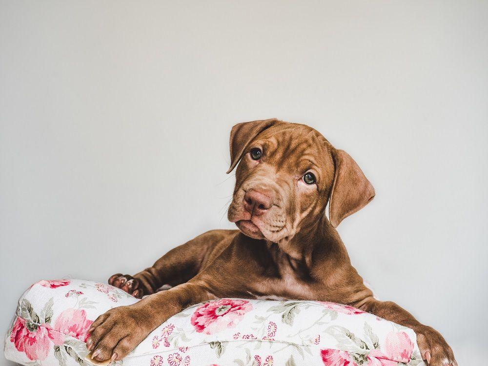 Foto de Las mejores camas para perros