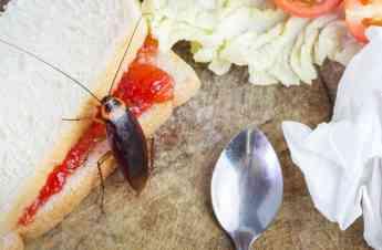 Rentokil Initial recomienda medidas para reducir la presencia de cucarachas