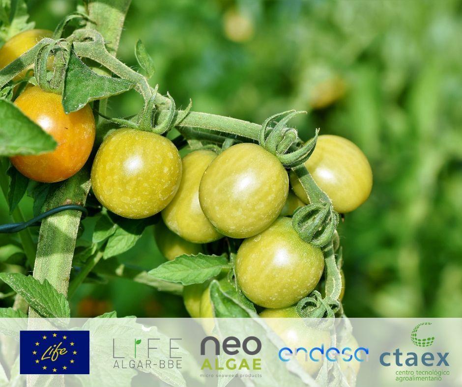 El proyecto europeo LIFE Algar-BBE, liderado por Neoalgae junto con Endesa y CTAEX, se pone en marcha
