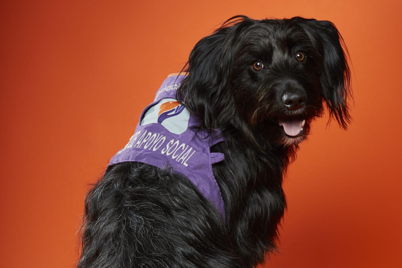 Globalfinanz relanza su web de seguros para mascotas, www.segurosmascotas.com