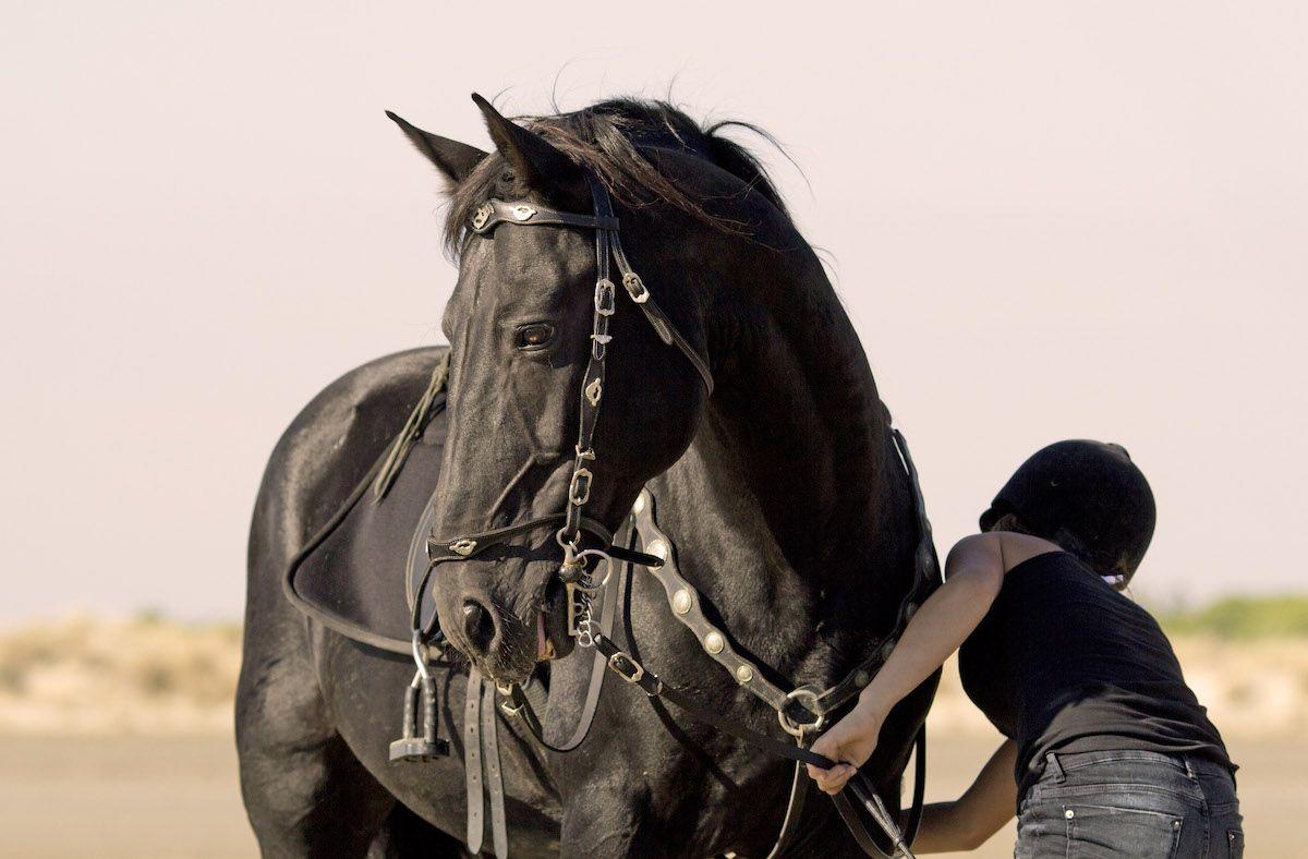 Fotografia Gala Equitación