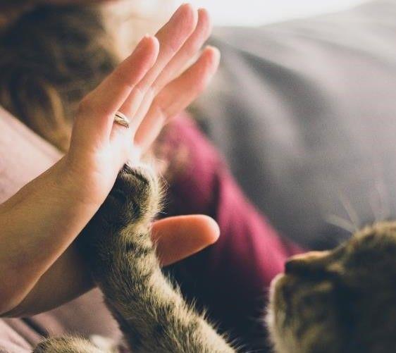 Un estudio de Edgard & Cooper destaca 20 curiosidades sobre los gatos