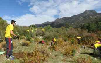 Foto de Plantación de árboles de DHL en Navacerrada