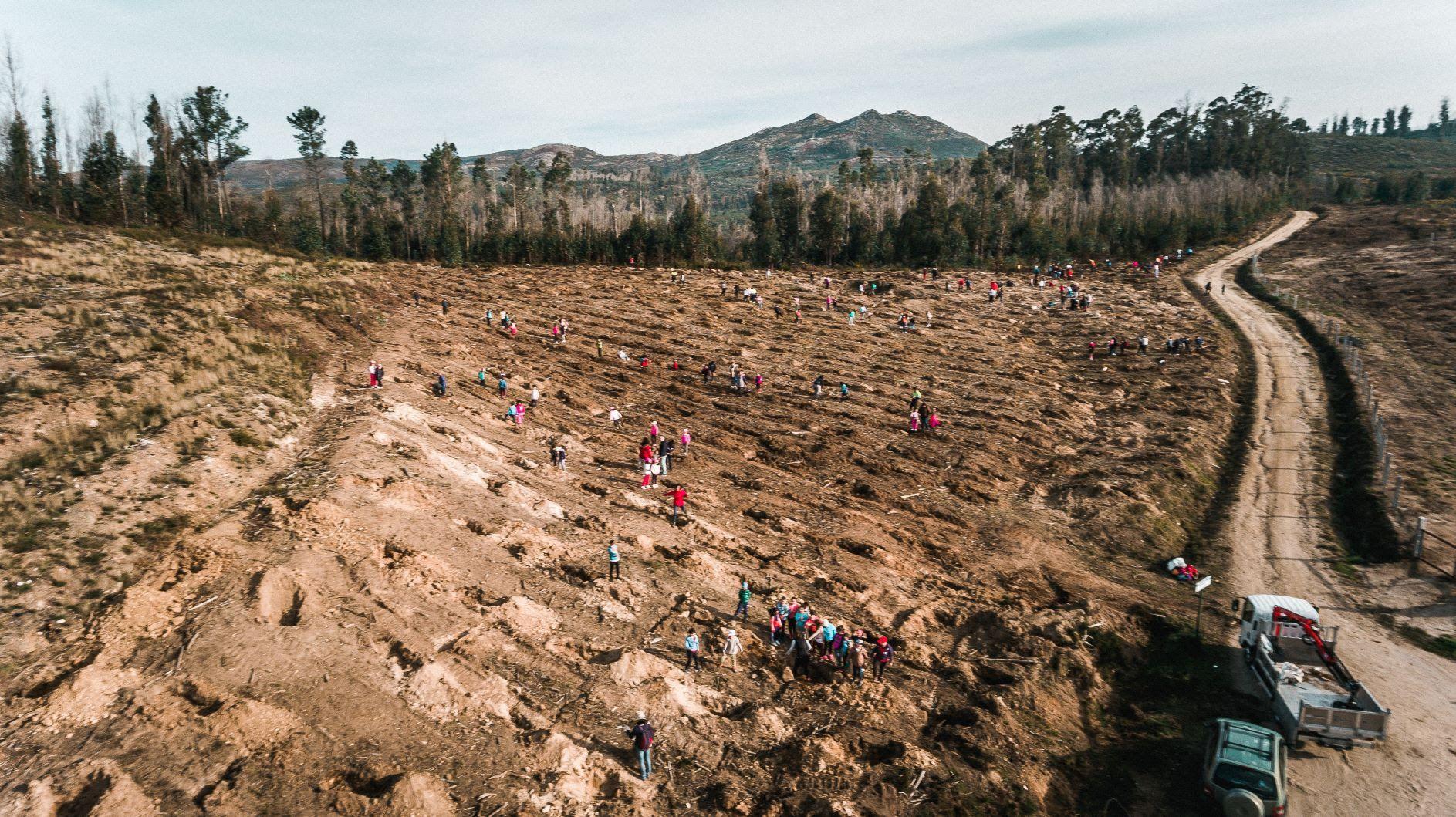 Foto de Imagen de una de las reforestaciones anteriores llevadas a