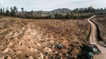 Imagen de una de las reforestaciones anteriores llevadas a cabo por ONE OAK.