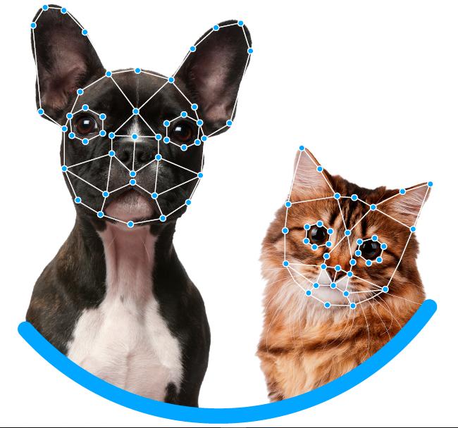 Reconocimiento facial para recuperar a mascotas perdidas