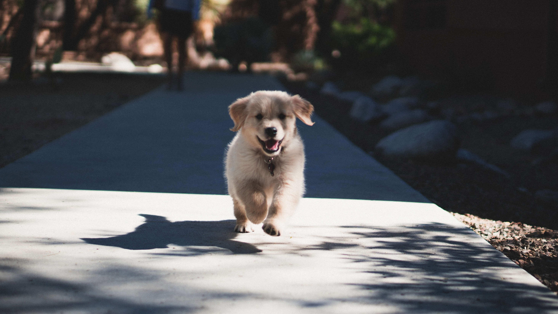 Edgard & Cooper propone 5 tips para educar a un cachorro