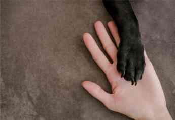 Foto de adopción perros