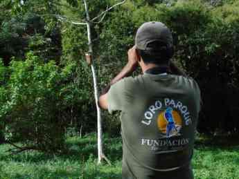Foto de Loro Parque Fundación salva a 10 especies de loros de la