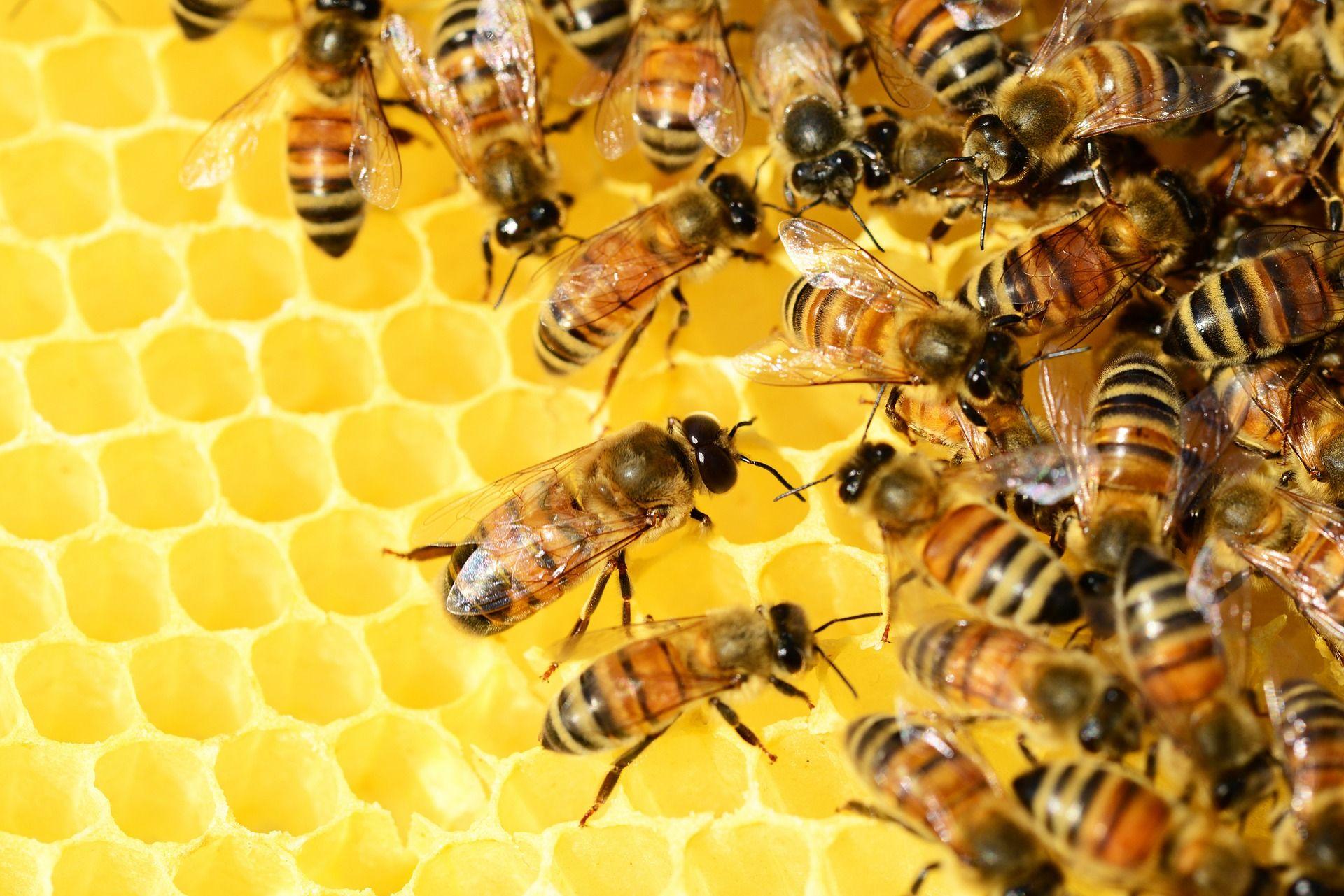 Foto de ANAE MIEL - Elaboracion de la miel
