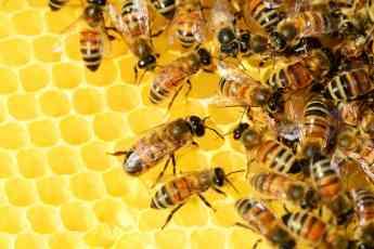 ANAE MIEL - Elaboracion de la miel