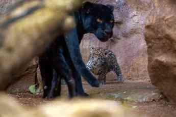 Foto de Loro Parque es reconocido como mejor zoológico del mundo