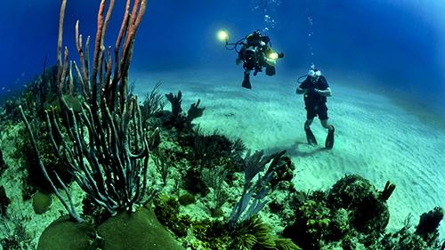 Foto de Buzos en arrecifes marinos