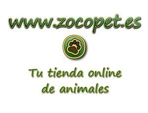 Accesorios para mascotas: perros y gatos en Zocopet.es