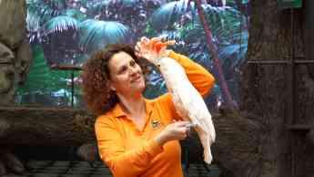 Foto de Loro Parque continúa haciendo las presentaciones de animales