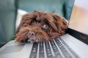 consecuencias legales de abandonar una mascota