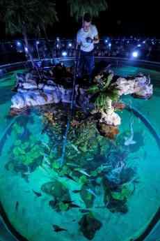 Tortugas de paseo y pulpos que juegan, la vida continúa sin público en Poema del Mar