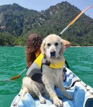 Foto de Cani-kayak