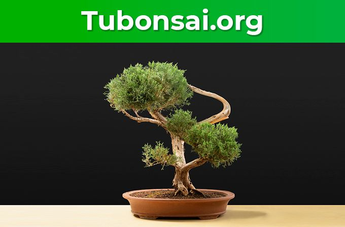 Foto de Tubonsai.org