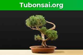 Tubonsai.org